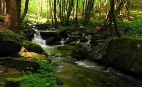 ruisseau2
