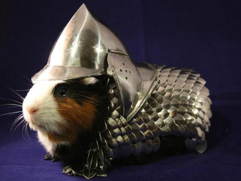 Une-armure-pour-cochon-d-Inde_exact780x585_l