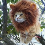 chat-perruque-lion